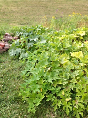 The herb spiral peeking out from the side of the summer squash and pumpkin patch.